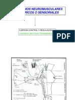 II Mecanismos Neuromusculares Perfifericos