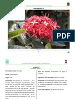 Flora Nectarifera y Polinifera en El Estado de Chiapas Ornamentales