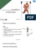 Sistema Esquelético Muscular