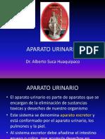 13 APARATO URINARIO1