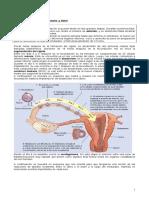 Guia Desarrollo Embrionario, Embarazo y Parto