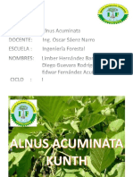 Informe-Diapositivas