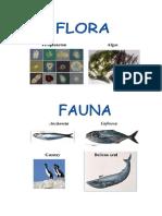 Floa y Fauna