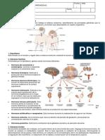 Ficha Teórico Práctico Sistema Endócrino