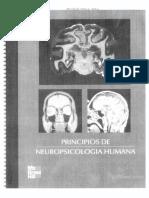 Principios.de.Neuropsicologia.humana