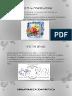 Efectos de La Temperatura de Congelación e Inferiores a La de Congelación Sobre Los Microorganismos y Conservación Empleando Temperaturas Altas (1)