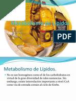 Generalidades de Los Carbohidratos