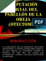 Amputación Estética de Orejas.