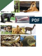 Fotos Animales Nativos