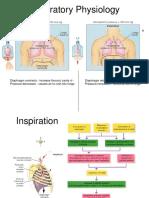 Nunn Respiratory Physiology Pdf