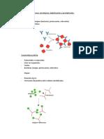 Clase II - Dr. Anhuaman - Reacciones Serológicas Aglutinación y Precipitación.