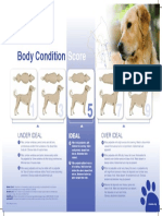 Body Condition Score Chart Dogs