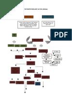 Pathophysiology of CVA