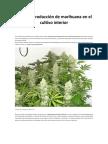 Máxima Producción de Marihuana en El Cultivo Interior
