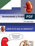 homeostasisyfuncionrenal