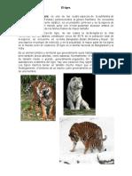 Agus El Tigre
