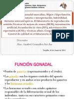 24 Funcion Gonadal Masculina