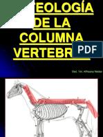 Osteología Columna Vertebral
