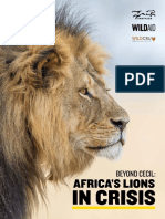 Lion Report