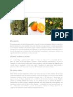 Naranja_monografias