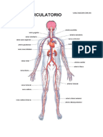Sistema Circulatorio Enfermedades