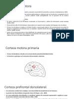 Corteza premotora.pptx