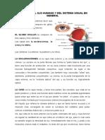 ANATOMÍA DEL OJO HUMANO Y DEL SISTEMA VISUAL EN GENERAL.doc