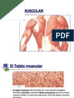 tejido-muscular-1202832509312749-4
