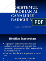 The Microbial Ecosystem of the Radicular Canal