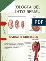 Semiologia Del Aparato Renal