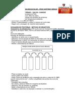Protocolo Extração e Dosagem de Proteínas