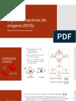 Especies Reactivas de Oxígeno (ROS)