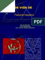 f. Hepatica
