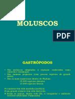8ª Aula de Paleontologia (PHYLUM MOLLUSCA)