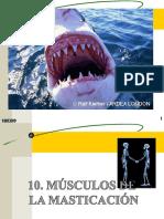 Musculos de La Masticación
