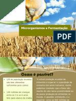 Micro Organismos e Fermentação