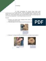 Grafting Tanaman Apel