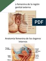 Anatomia y Fisiologia Femenina