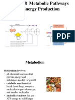 Chapter 18 Metabolic Pathways