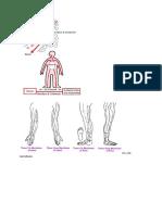 circulation of qi.docx