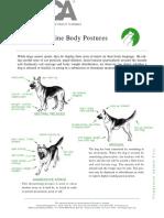 Canine Body Language ASPCA