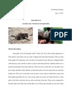 Palm Civet - Patalinghug
