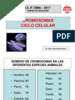 CROMOSOMAS-CACEDA