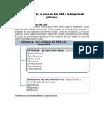 Quinolonas y Rimamicinas (Inhibidores de ARN Polimerasa)