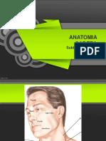 Anatomia Huesos Craneo
