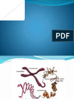 cromosoma-121118222305-phpapp02.pptx