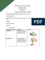 FL-03-cilcomenstrual-ossa-rosas-j.docx