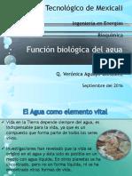 Función Biológica Del Agua