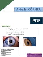 6 Patol Cornea