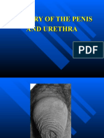 Surgery of Penis & Uretra